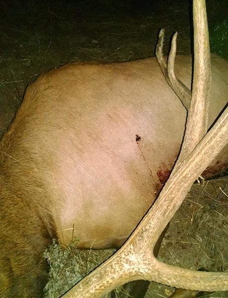 dead animal with a gunshot wound